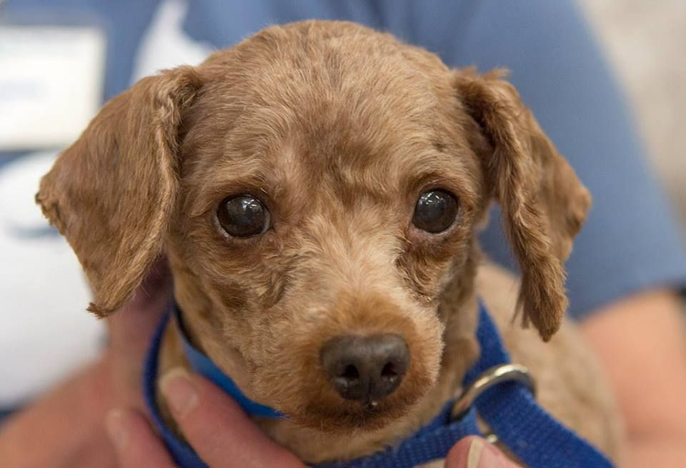 Stoppuppymills All Of These Dogs Are Located At Our Kennel Near Colorado Springs They Will Be Listed On Our Website S Available Dogs Dog Adoption Dogs Pets