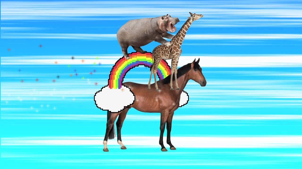 Hippo Tickles Giraffe While Riding Magical Rainbow On Top Of A Horse Magical Rainbow Giraffe Animals