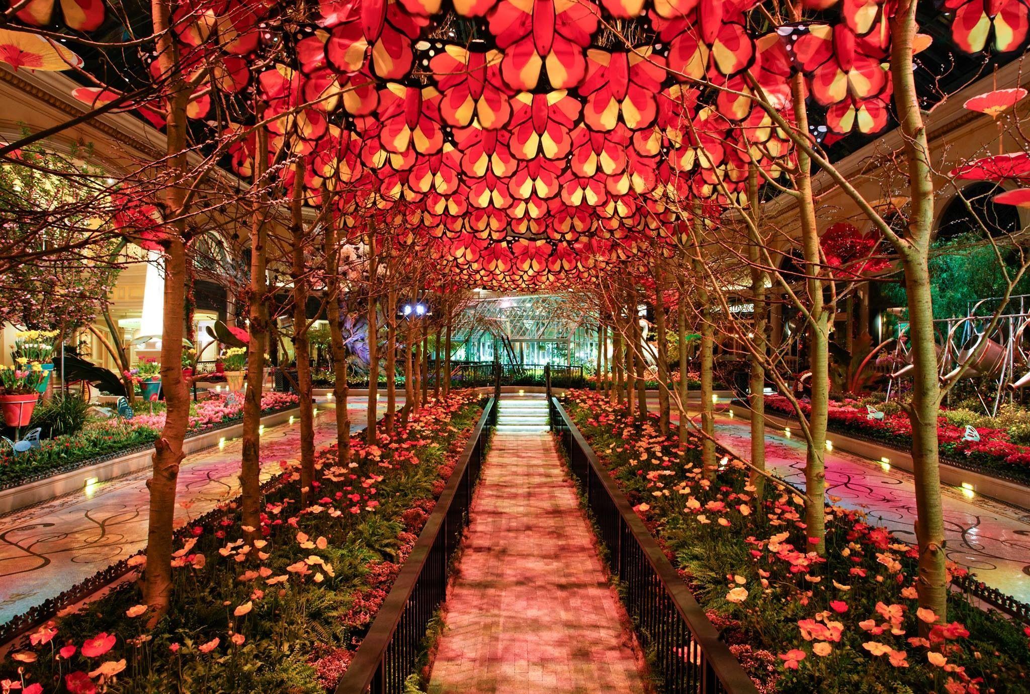 Beautiful Butterflies Bellagio conservatory, Las vegas