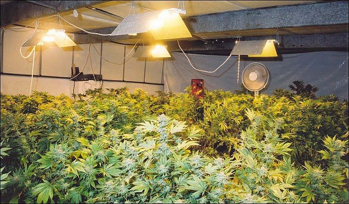 Hydroponics Lights for growing plants httphighpower4scom