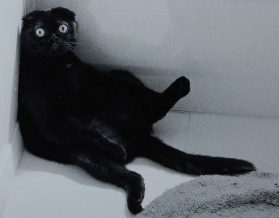 Duncan After a Long Hard Day by KipHolmPhotography on Etsy, $45.00