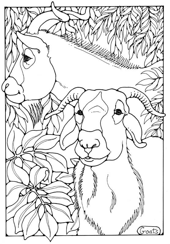 Art with edge coloring pages ~ goats colouring page by Dandi Palmer | Animal coloring ...