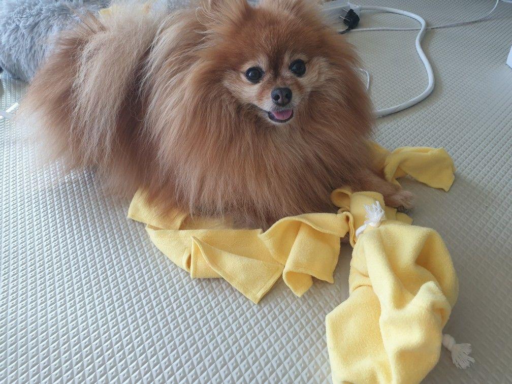 Snuffle Mat Pet Dog Toy Small Snuffle Pocket Treat Puzzle Reward