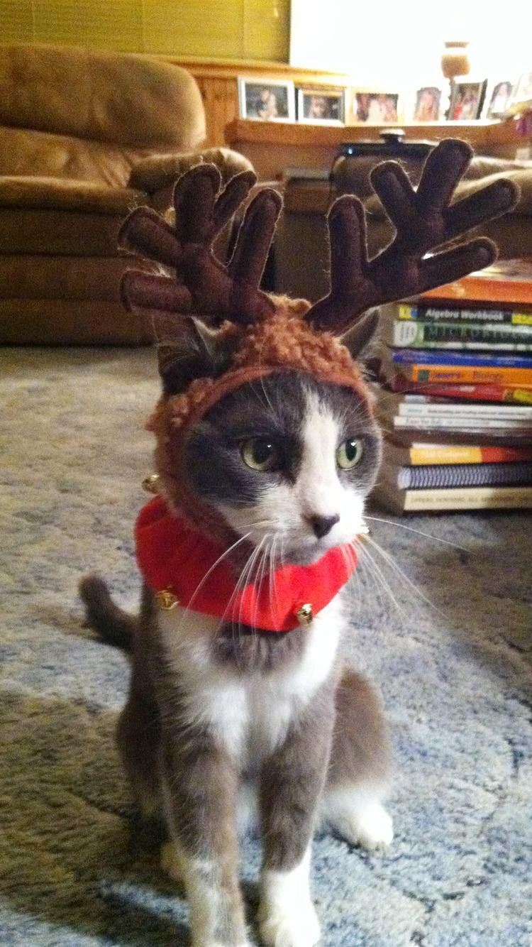 15 Pets All Dolled Up For Christmas Eve I Can Has
