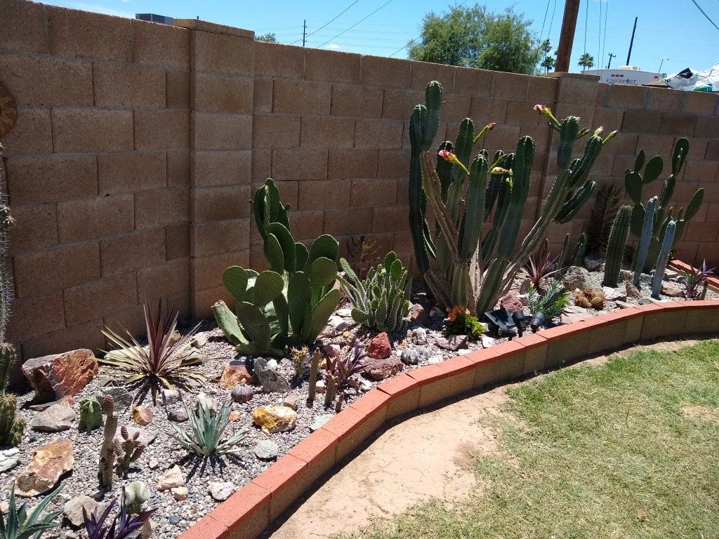 Pin By Fausto Channave On Cactus Garden With Images Cactus Garden Plants Garden