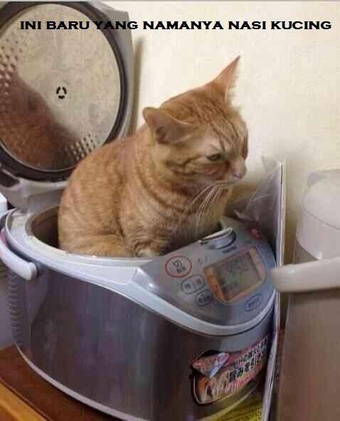 Beberapa Meme Kucing Yang Bisa Buat Agan Ngakak