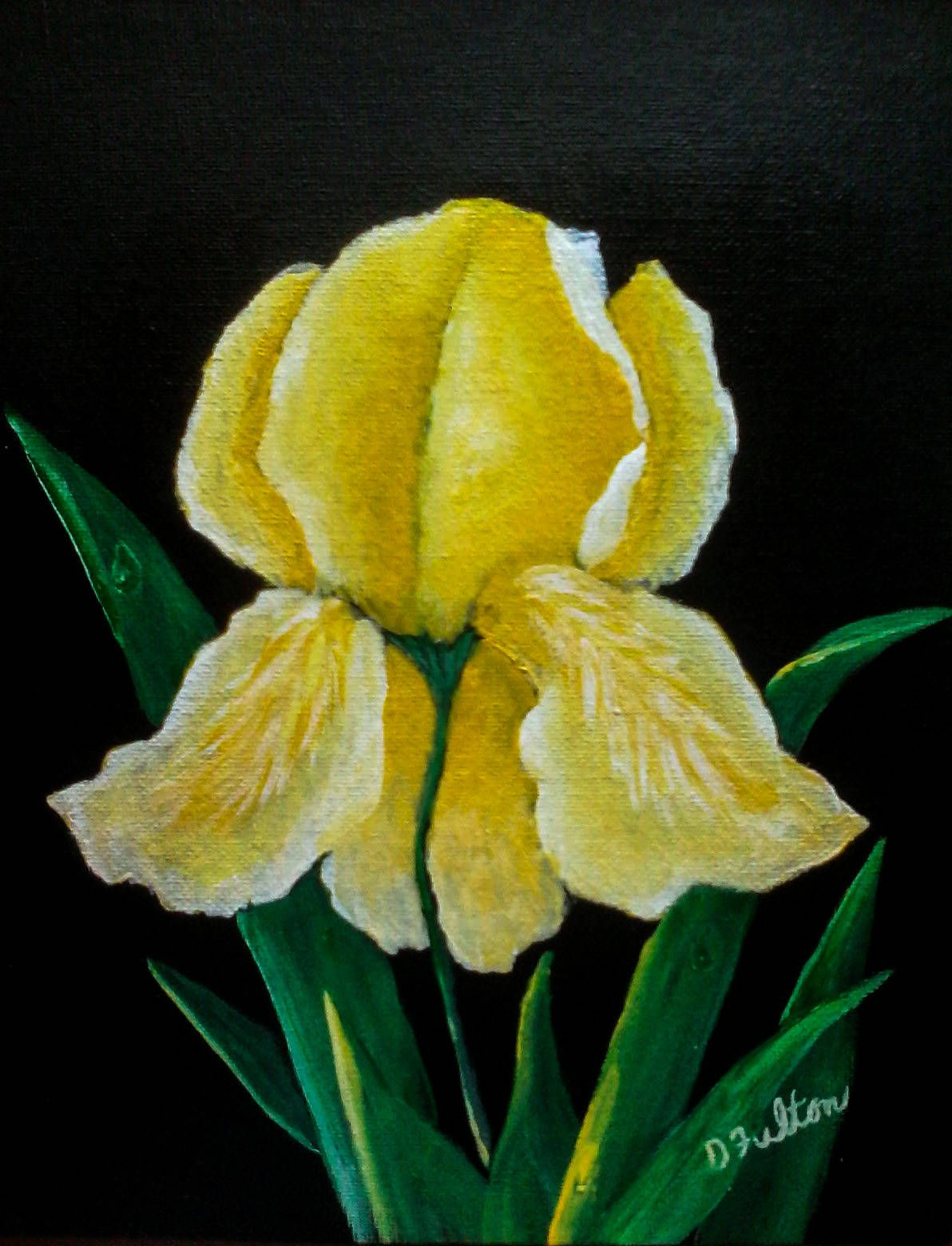 Yellow Bearded Iris Flower Painting Acrylic Floral Painting Still
