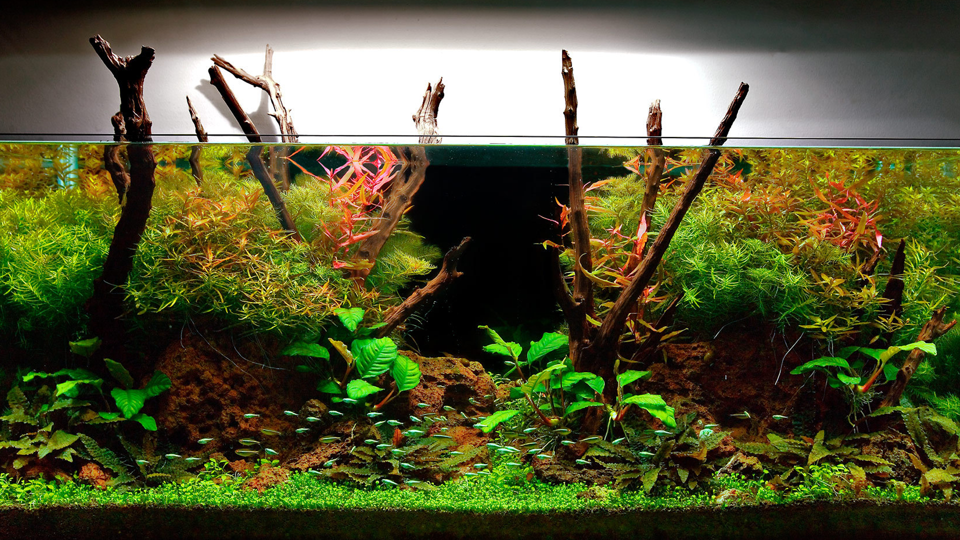 Learn how to choose the best fish for 10 gallon tank setup that