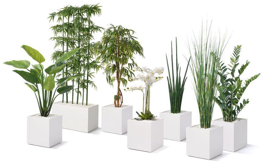 Seminaturale Pflanzen München Büropflanzen Pflegeleicht