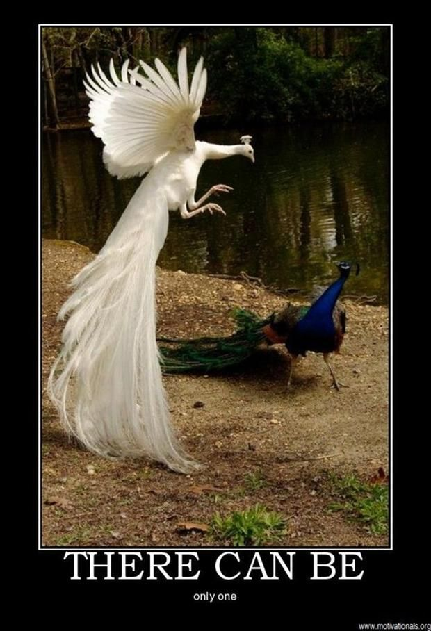 There Can Be Only One Beautiful Birds Albino Animals Pet Birds