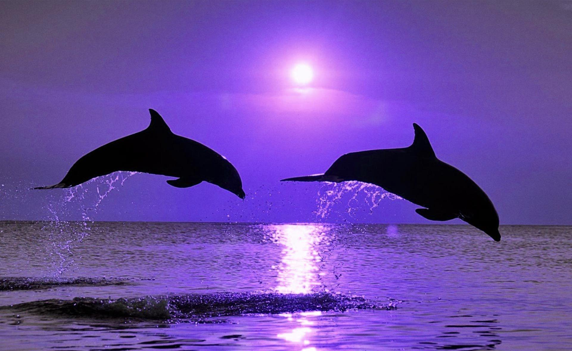Fondos De Pantalla Grandes: Fondo Escritorio Delfines Saltando