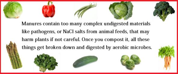 Best Manures For Your Veggie Garden