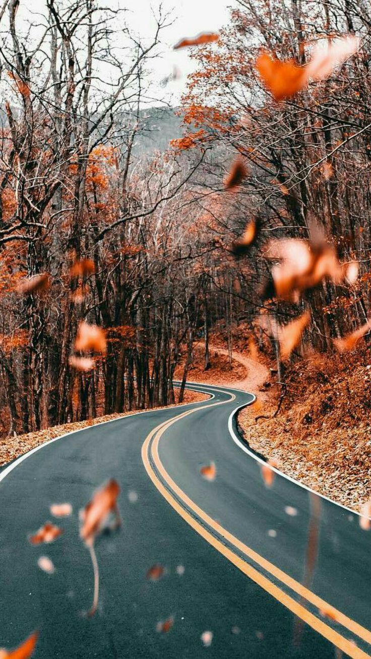 Image about nature in autumn vibes - by seasons by
