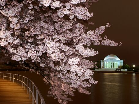 Capital Weather Gang Photography Cherry Blossoms By Night Cherry Blossom Chinoiserie Wedding Cherry Blossom Festival