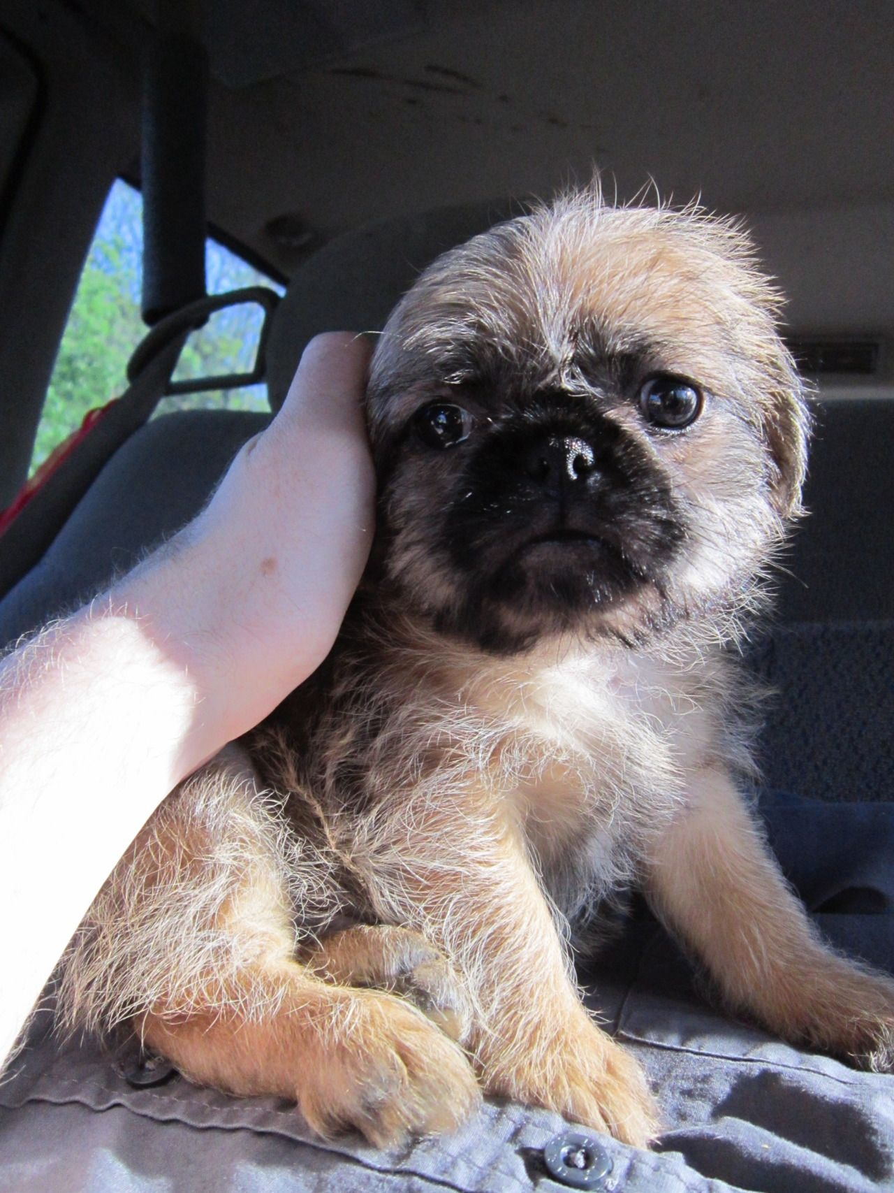 Pugzu Holey Shit It S Adorable Cute Baby Animals Cute Animals