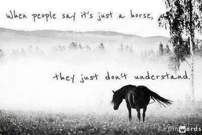 When people say it's just a horse, they just don't understand.