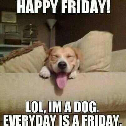 Friday Humor Funny Puppy Memes Puppies Funny Funny Dogs