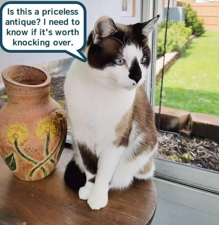 Pin by Phyllis Griffiths on Cattitude Funny animals