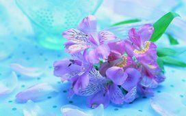 Flores, pétalos de flores, belleza