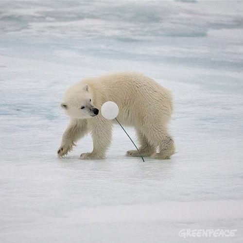 El hielo del Ártico, del que todos dependemos, está desapareciendo. En los últimos 30 años hemos perdido tres cuartas partes de la capa de hielo flotante de la cima de la Tierra.
