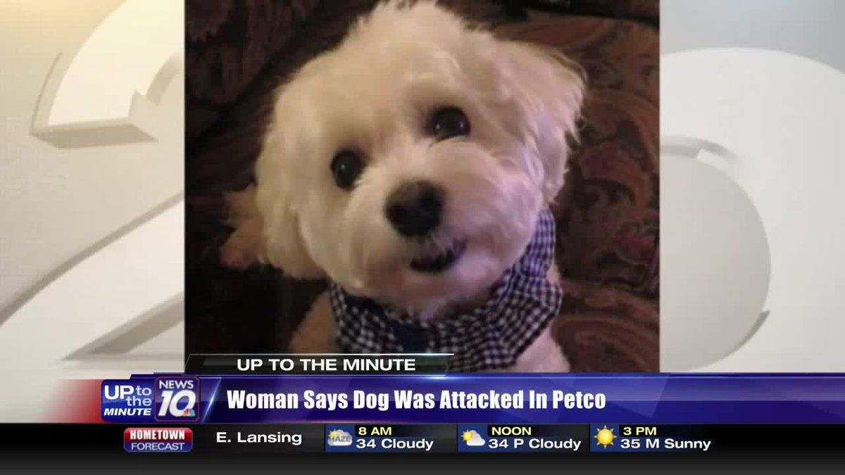 Woman Says Her Dog Was Attacked And Killed Inside Petco Store Dogs Dog Teeth Cleaning Petco