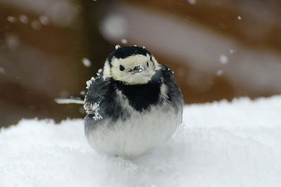 Snow bird | Birds, Beautiful birds, Bird photo