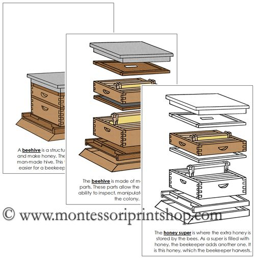 Beehive Nomenclature Book Describes And Illustrates 10