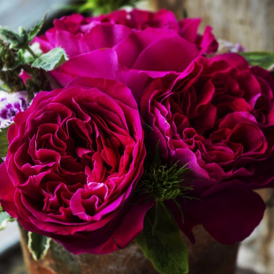 royal wedding davidaustin kate go visit your florist or order them online http www. Black Bedroom Furniture Sets. Home Design Ideas