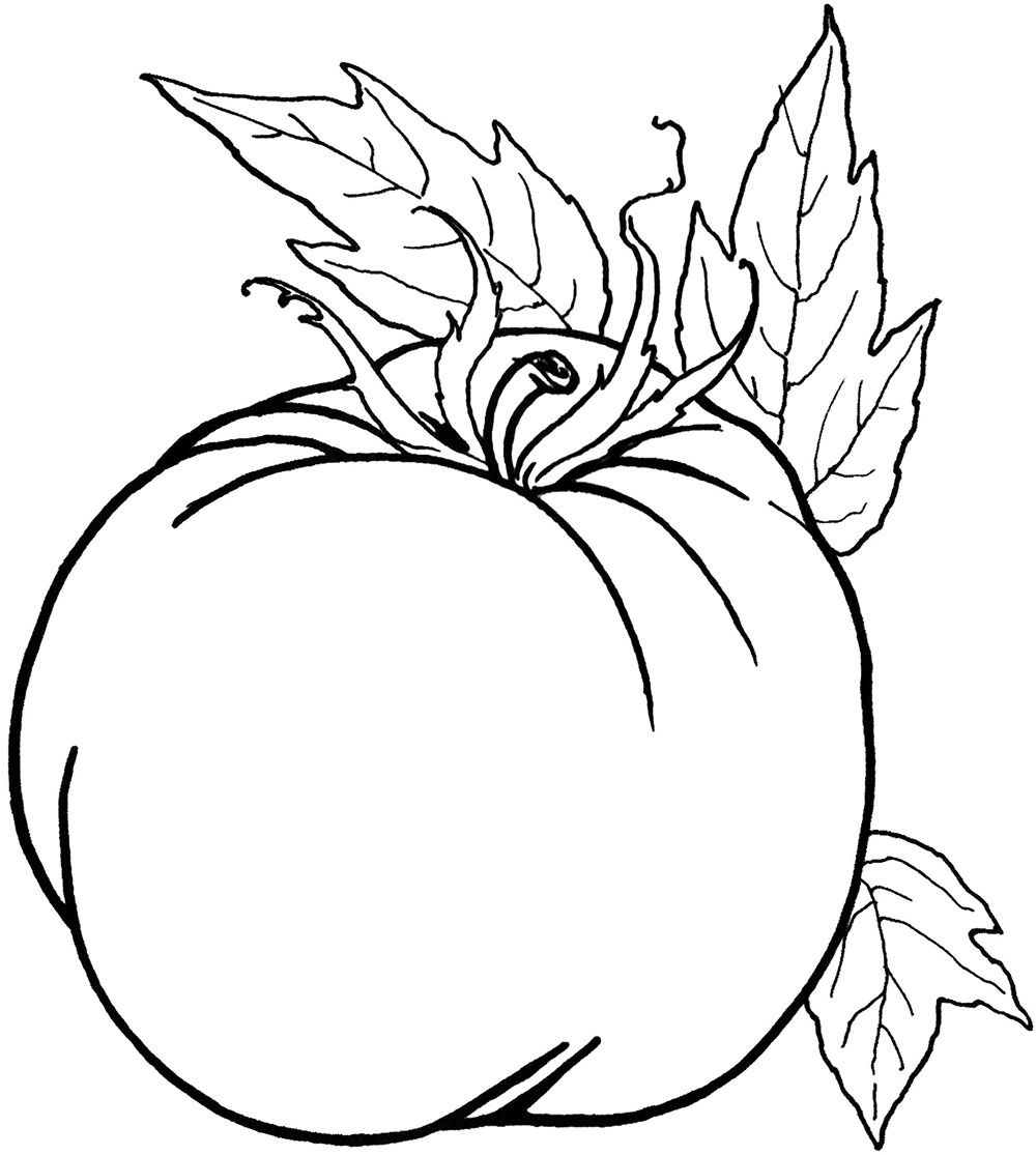 vegetable food pumpkin food coloring pages pinterest
