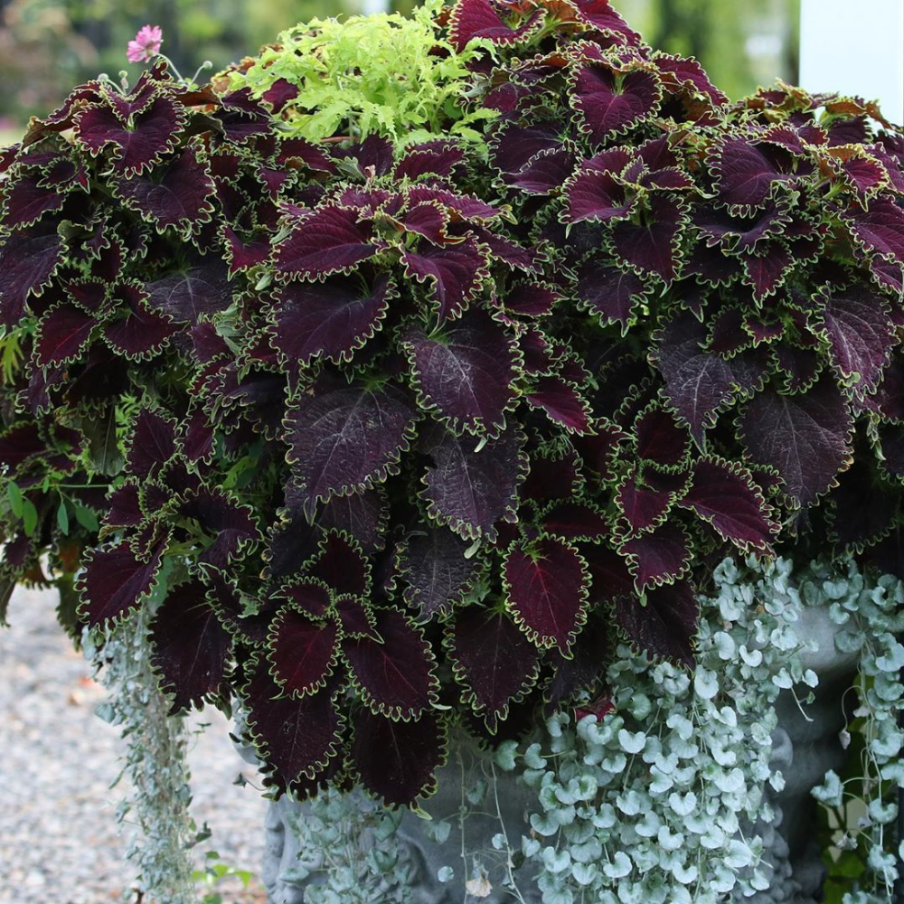 Pin on Garden Answer Instagram Photos