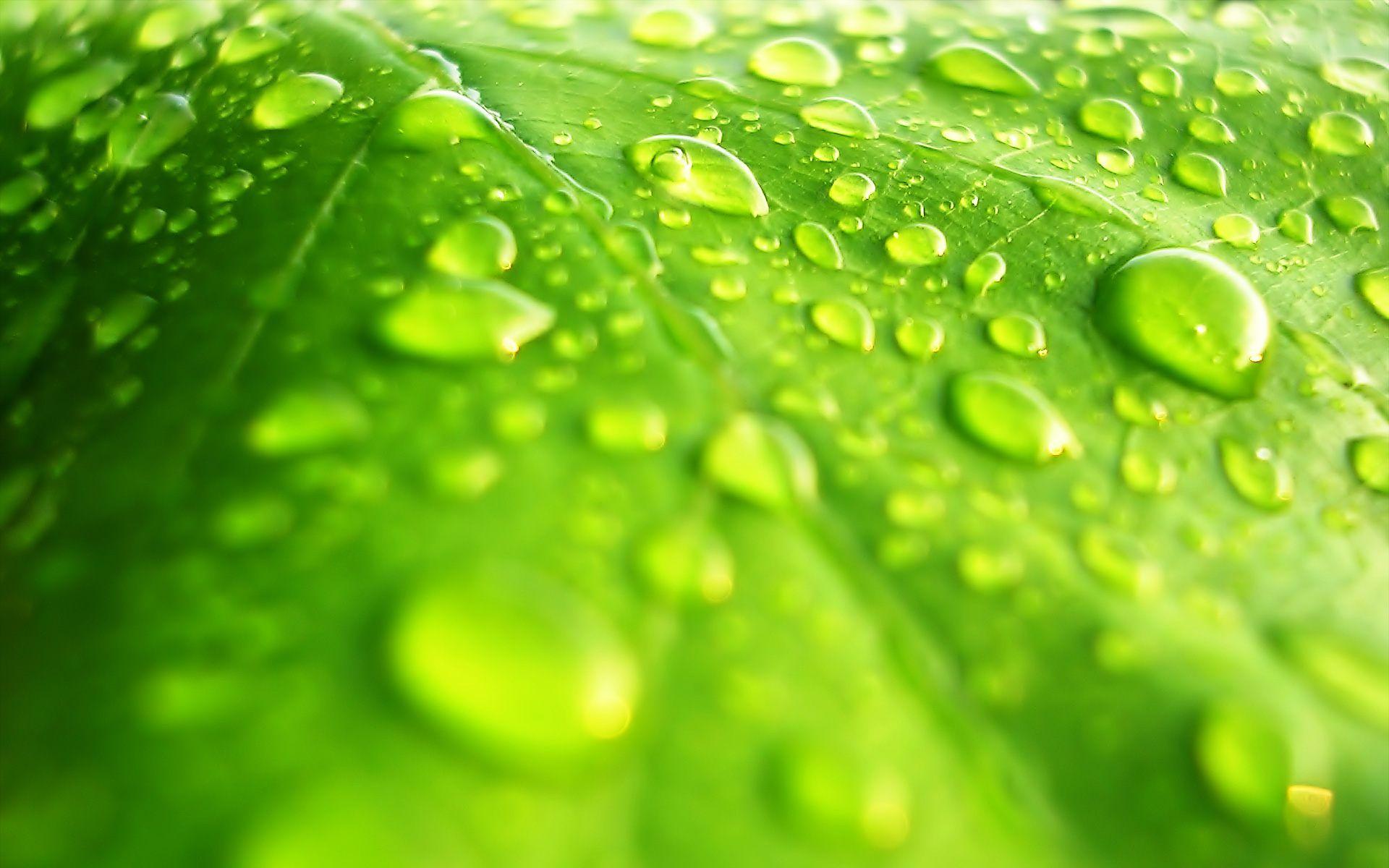 Raindrops On A Green Leaf HD desktop wallpaper High Definition