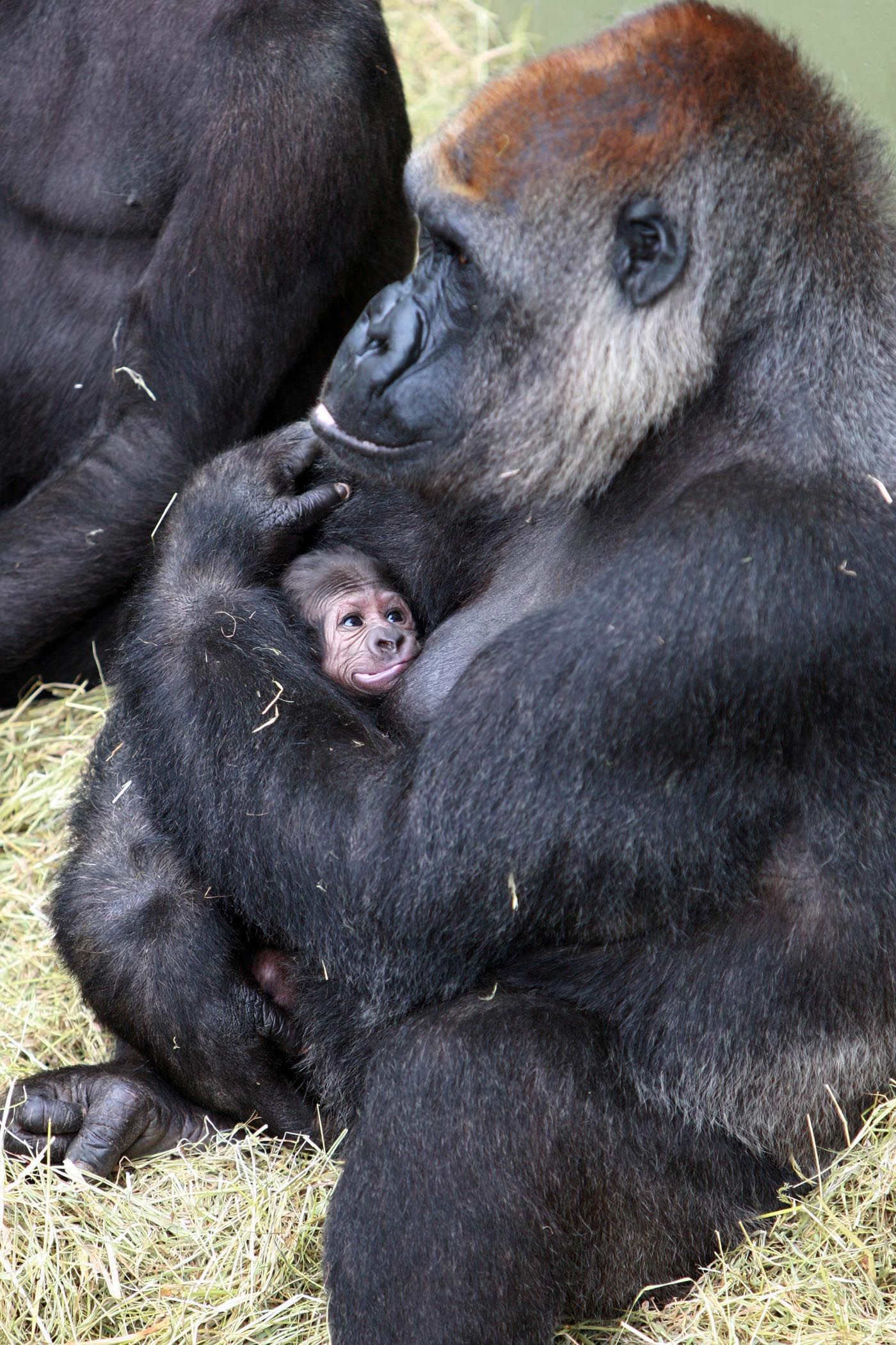 Www Bing Com1 Microsoft Way Redmond: New Mom Lana With Her Baby At Dublin Zoo In Ireland
