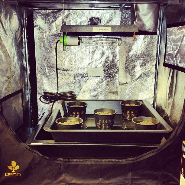 dp90 grow tents & dp90 grow tents | Hg Hydroponics Shop u0026 Product Photos | Pinterest ...