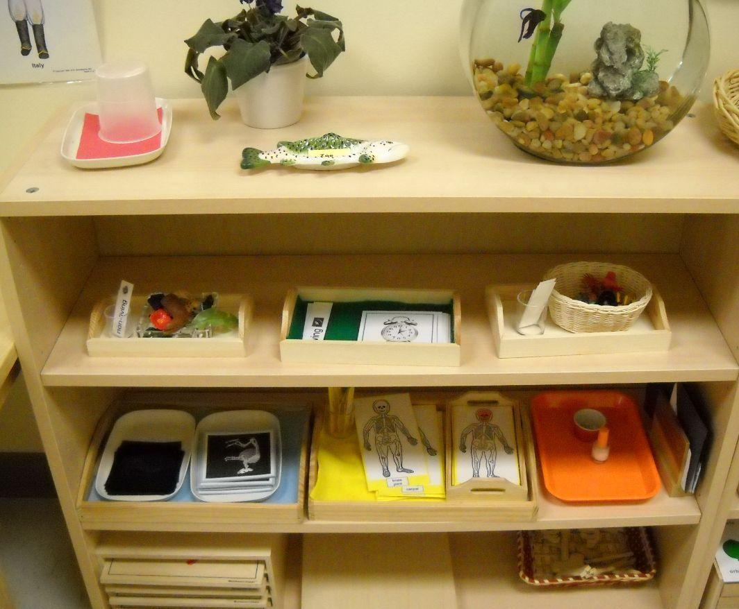 Life Science Shelf Trillium Montessori