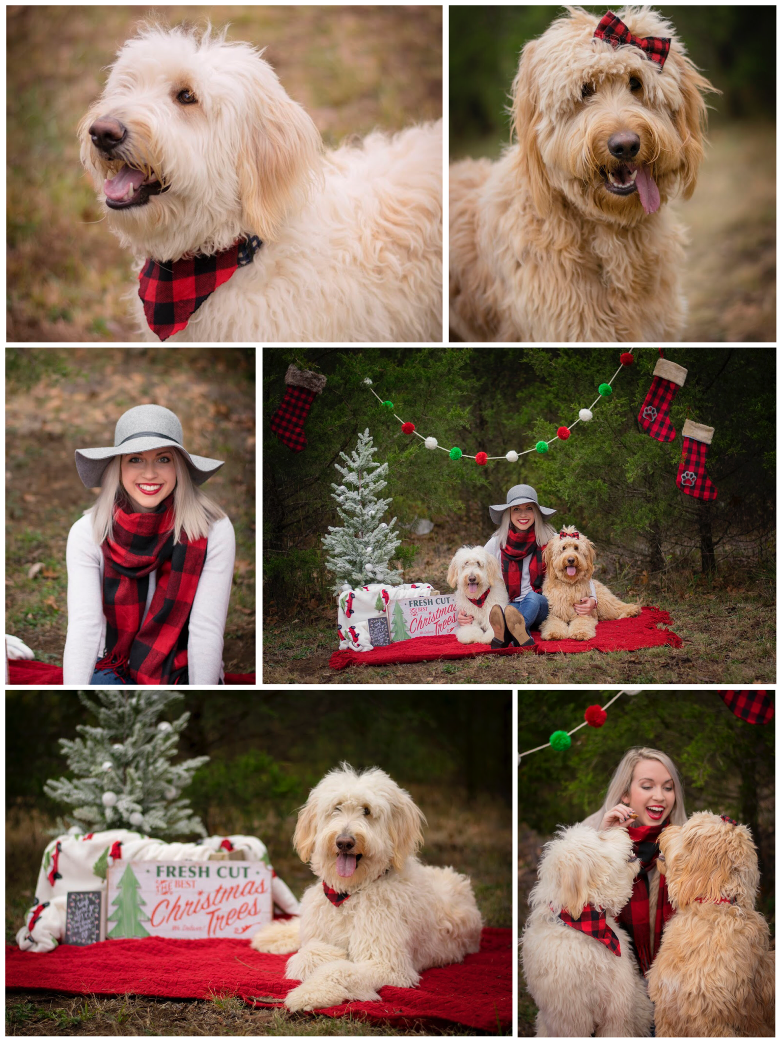 Family Christmas Pictures Ideas With Dogs Outdoor In Cedar Trees Props Photos
