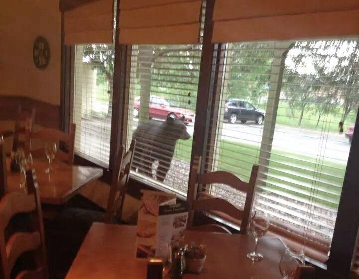 black bear shows up at eau claires olive garden without reserva wqow tv eau claire wi news18 news weather and sports - Olive Garden Eau Claire