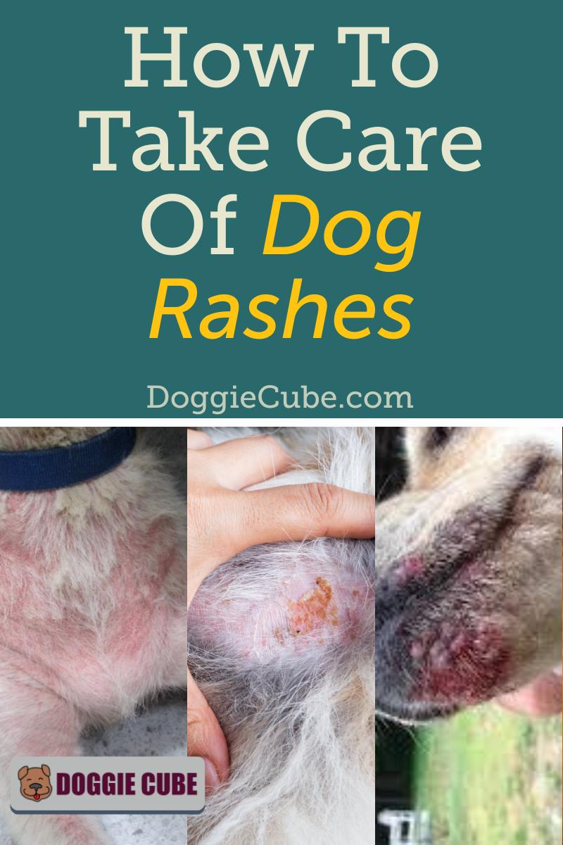 How To Take Care Of Dog Rashes Doggie Cube Dog Rash Dog Remedies Dog Skin