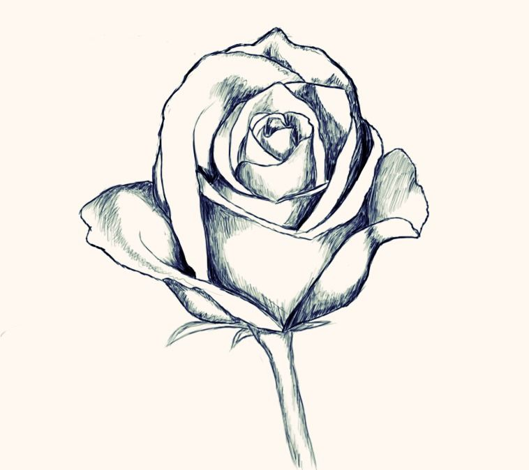 Do you know how simple it is to draw a realistic rose with pencil start drawing rose with beginners tutorial on how to draw a rose and make it beautiful