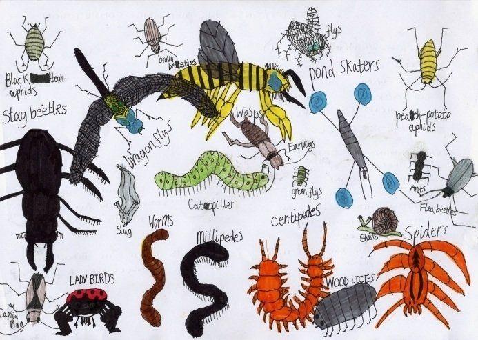 Handgemaakte insecten