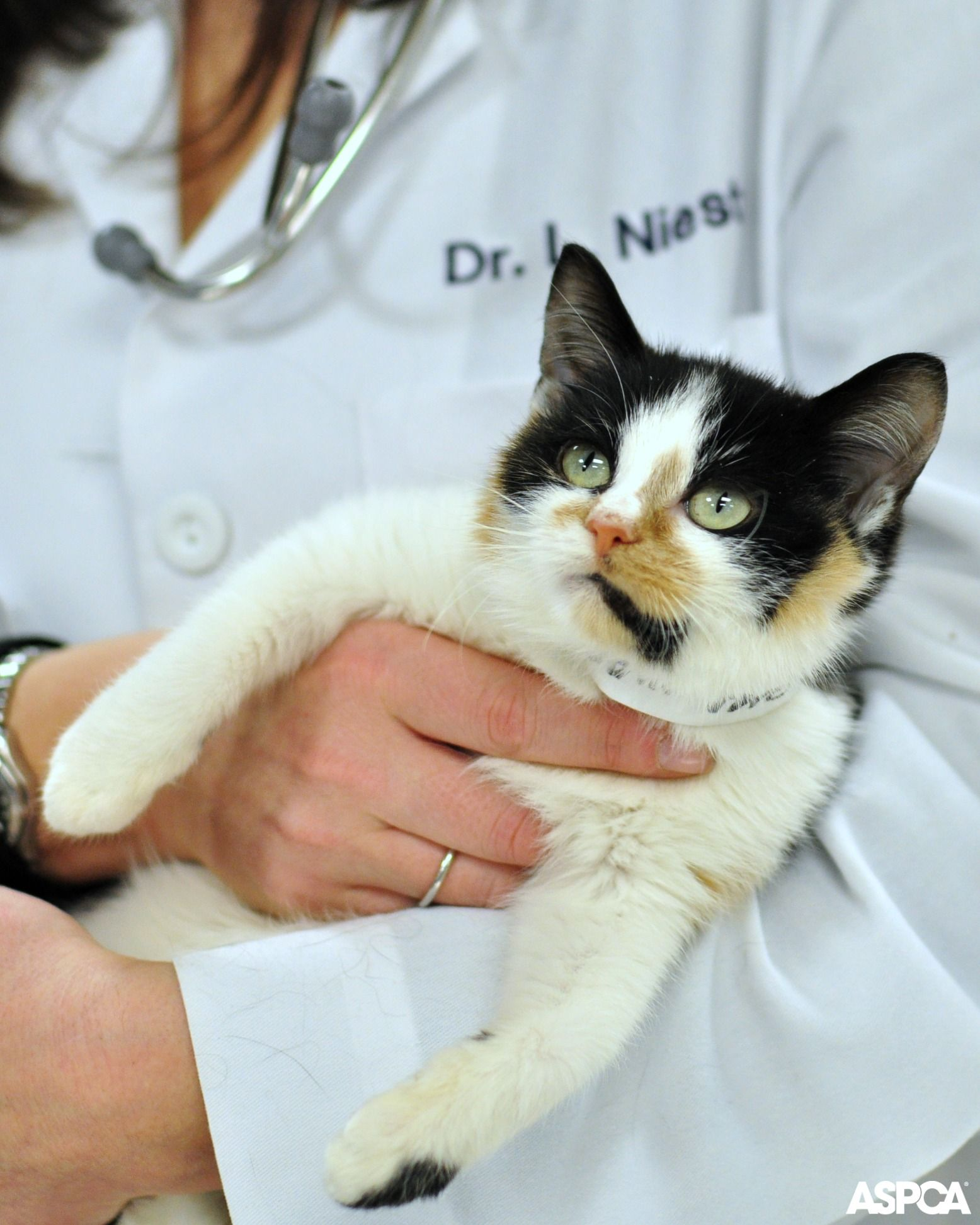 A New Act Passed By Congress Will Help Animals Get The Vet Care They Need Http Www Aspca Org Blog Victory Congress Passes Animals Pet Care Animals Beautiful
