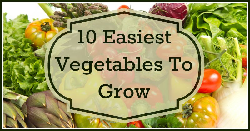 10 Easiest Vegetables To Grow Easy Vegetables To Grow Growing