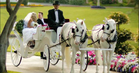 Horse And Carriage Wedding Getaway Car Like A Dream