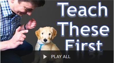 Here Is A Collection Of Zak George S Best Dog Training Videos On