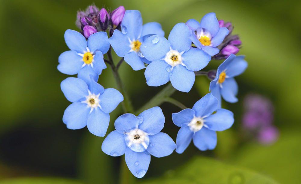 Blumen und ihre Bedeutungen