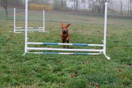 Diy Build Your Own Agility Jumps Dog Agility Diy Dog Agility