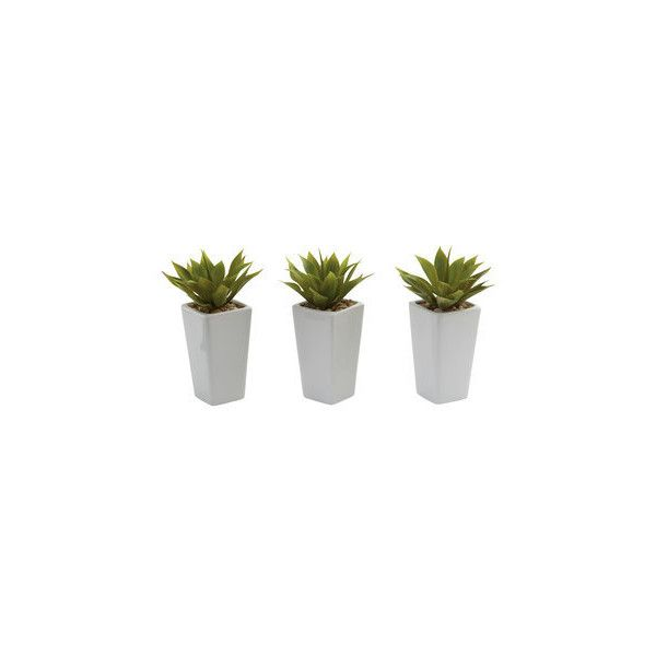 Nearly Natural Mini Agave and White Planter Set (Set of 3) (Mini Agave... ($44) ❤ liked on Polyvore featuring home, home decor, floral decor, fillers, plants, fillers - plants, items, outside planters, white home accessories and white outdoor planters