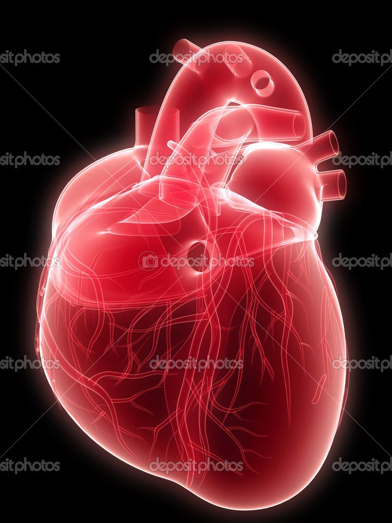 Human heart diagram blood flow honey singh choot vol 1 download i human heart diagram blood flow honey singh choot vol 1 download ccuart