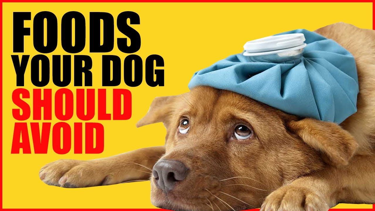Foods Your Dog Cant Eat 7 Foods your Dog Should Avoid in