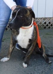Adopt Jake on Terrier mix dogs, Terrier mix, Terrier