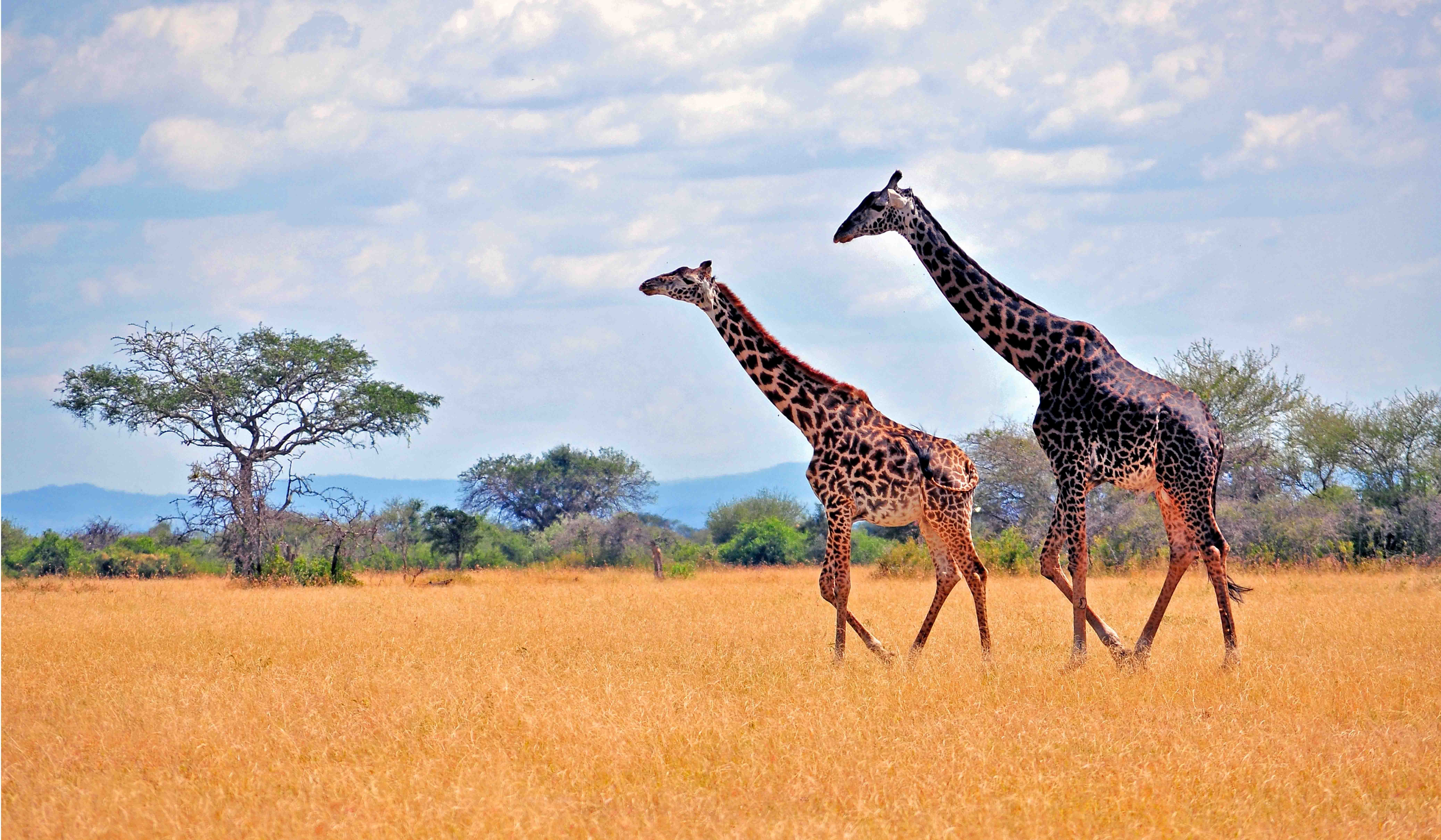 Sustainable Tourism In Kenya Case Study